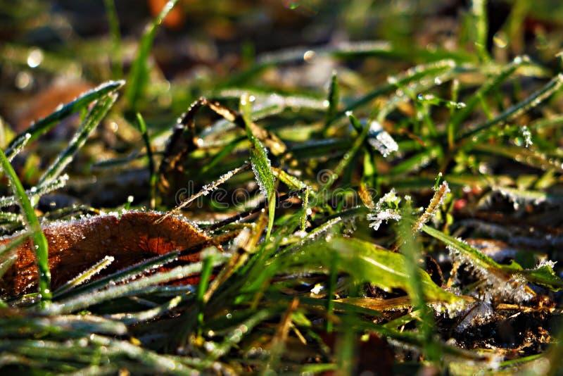 Παγωμένα και παγετός-καλυμμένα φύλλα ενός στις αρχές χειμερινού πρωινού, στενή άποψη στοκ φωτογραφία