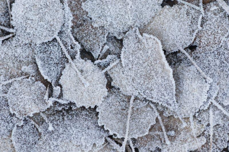 Παγωμένα νεκρά φύλλα στο έδαφος στοκ εικόνες με δικαίωμα ελεύθερης χρήσης