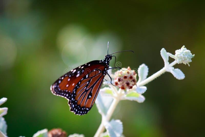 Παγωμένα φτερά στοκ φωτογραφία με δικαίωμα ελεύθερης χρήσης