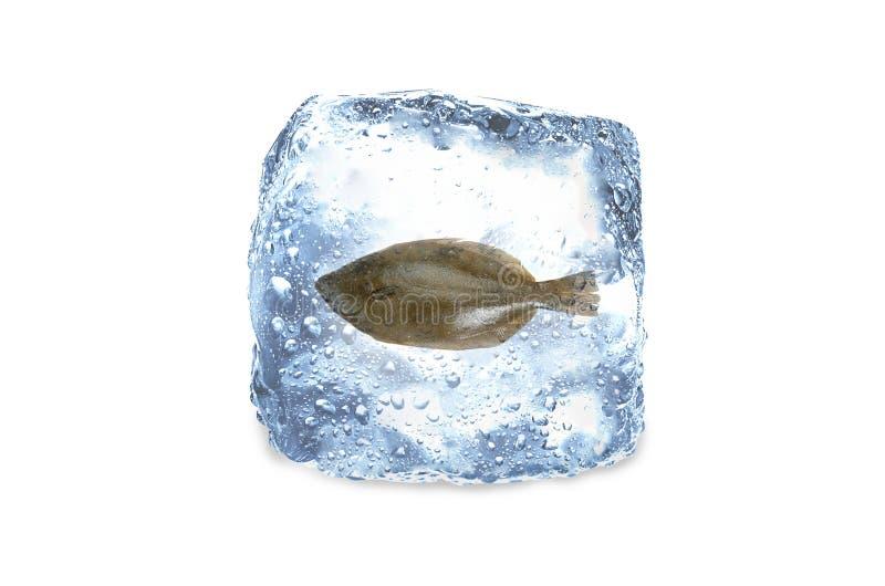 Παγωμένα ψάρια, πάγος στοκ εικόνα