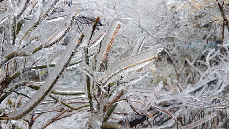 παγωμένα brances μετά από τη βροχή παγώματος στοκ φωτογραφία με δικαίωμα ελεύθερης χρήσης