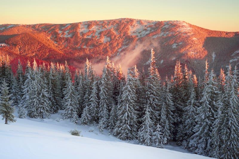Παγωμένη ανατολή Carpathians στοκ εικόνες