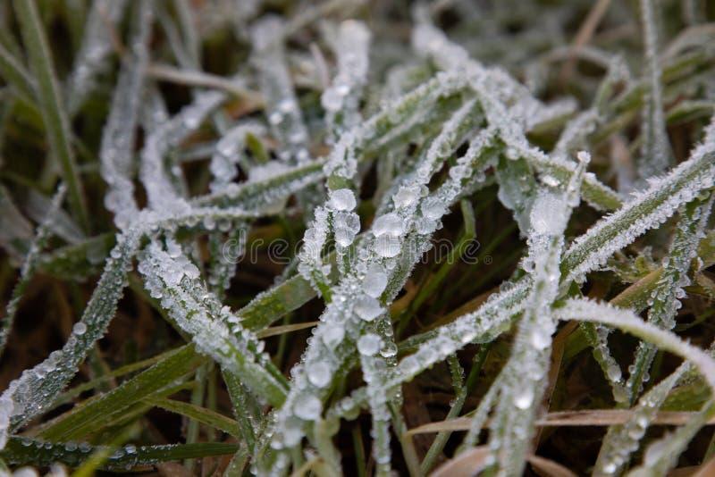 Παγωμένη δροσιά πρωινού στα φύλλα χλόης στοκ φωτογραφία