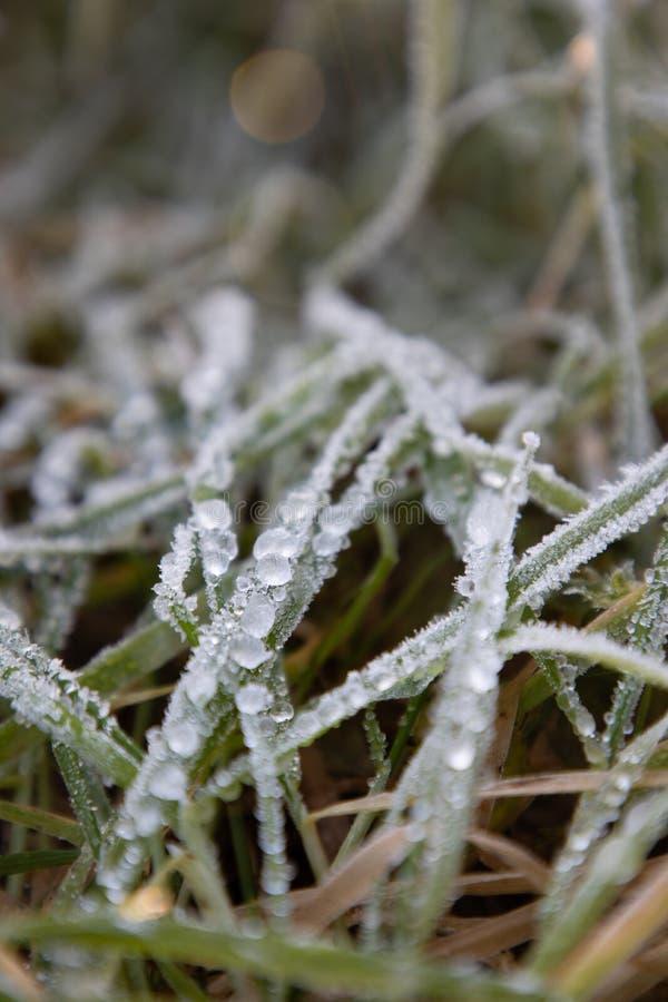 Παγωμένη δροσιά πρωινού στα φύλλα χλόης στοκ φωτογραφίες με δικαίωμα ελεύθερης χρήσης