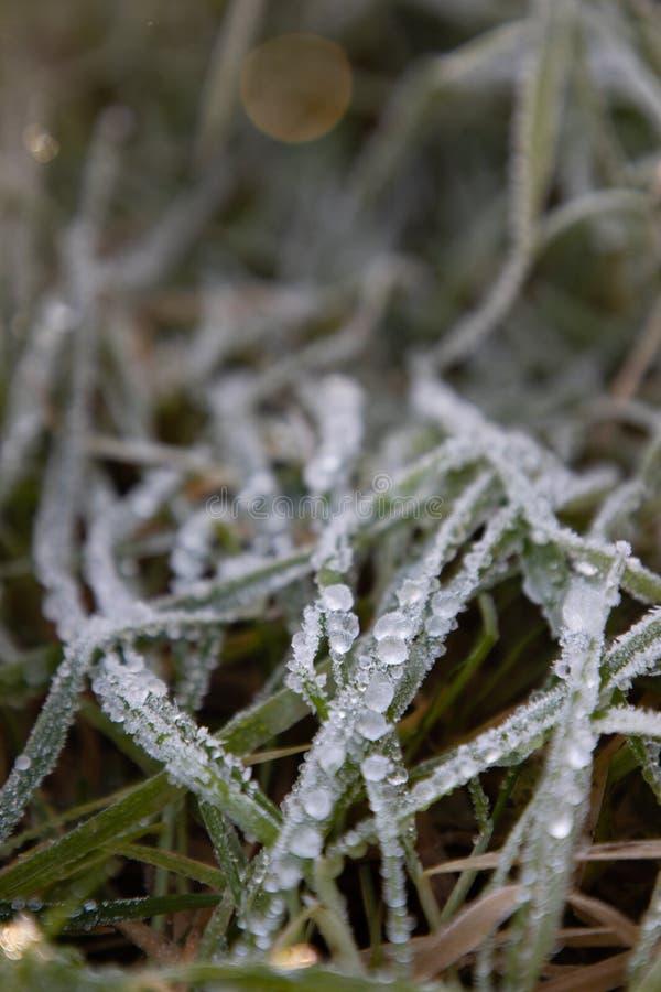 Παγωμένη δροσιά πρωινού στα φύλλα χλόης στοκ φωτογραφίες