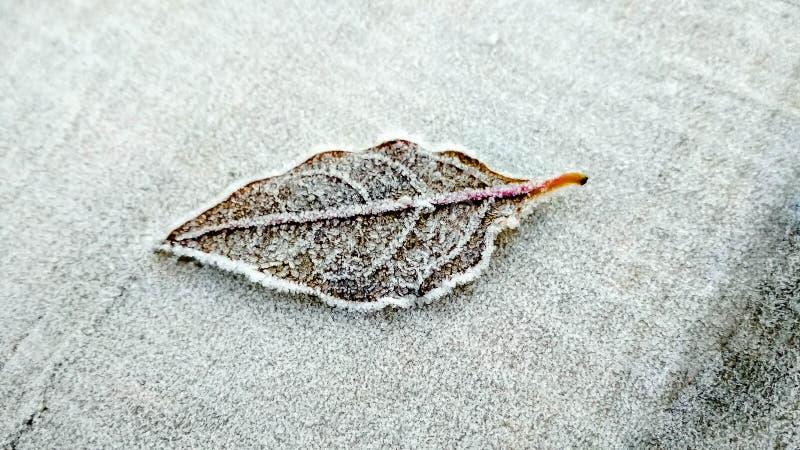 Παγωμένη δροσιά στο φύλλο στοκ φωτογραφία με δικαίωμα ελεύθερης χρήσης