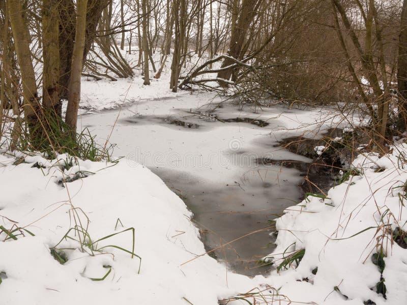 Παγωμένη λιμνοθάλασσα των γυμνών δέντρων ξύλων χιονιού επιφάνειας λιμνών νερού στοκ φωτογραφίες με δικαίωμα ελεύθερης χρήσης