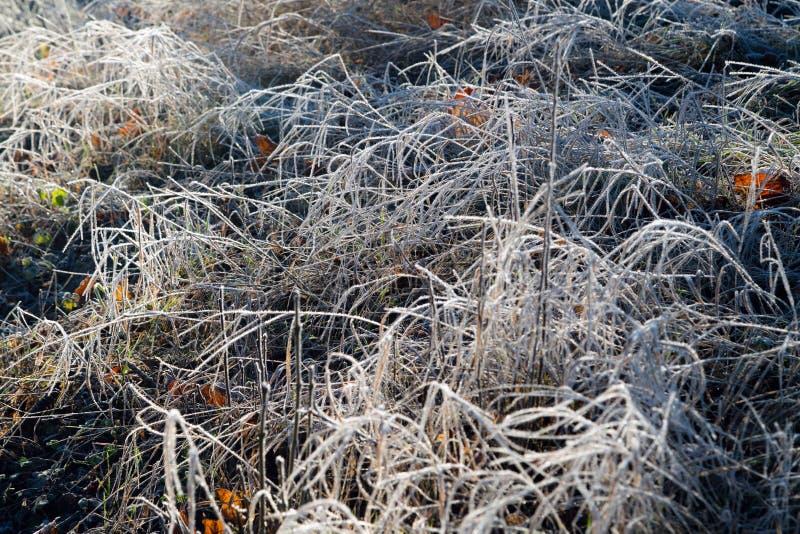 Παγωμένη ξημερώματα hoarfrost χλόη το πρόωρο πρωί φθινοπώρου Παγωμένες εγκαταστάσεις στον κήπο, χειμώνας προσέγγισης στοκ εικόνες
