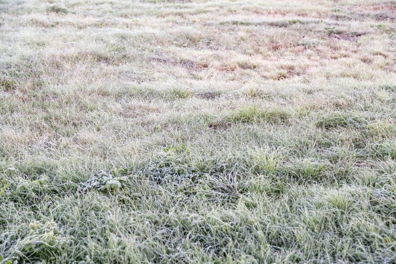 Παγωμένη ξημερώματα hoarfrost χλόη το πρόωρο πρωί φθινοπώρου FR στοκ φωτογραφίες