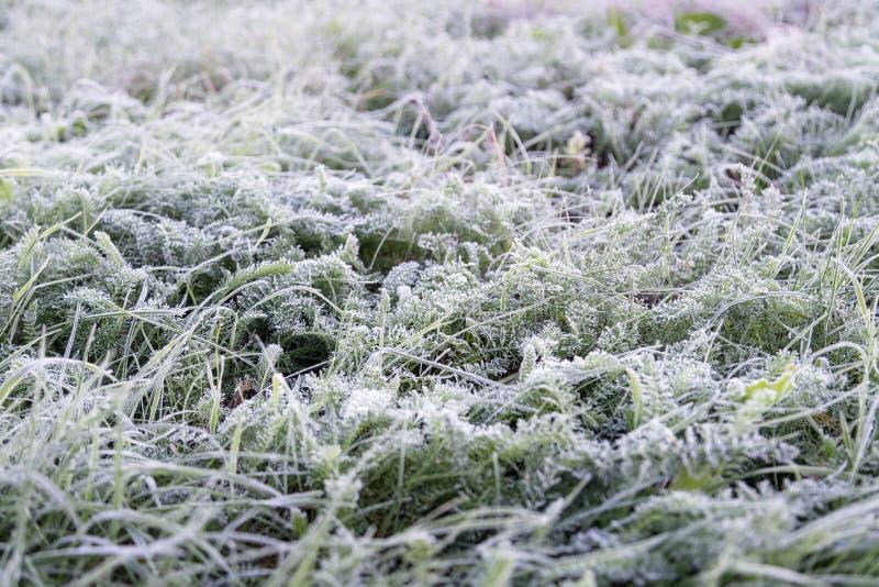 Παγωμένη ξημερώματα hoarfrost χλόη το πρόωρο πρωί φθινοπώρου FR στοκ φωτογραφίες με δικαίωμα ελεύθερης χρήσης