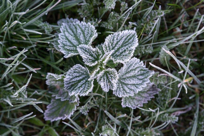 Παγωμένη ξημερώματα hoarfrost χλόη το πρόωρο πρωί φθινοπώρου FR στοκ φωτογραφία με δικαίωμα ελεύθερης χρήσης