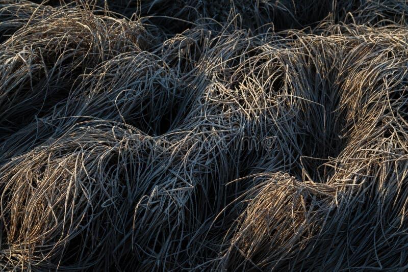 Παγωμένη ξημερώματα hoarfrost χλόη το πρόωρο πρωί φθινοπώρου FR στοκ εικόνες