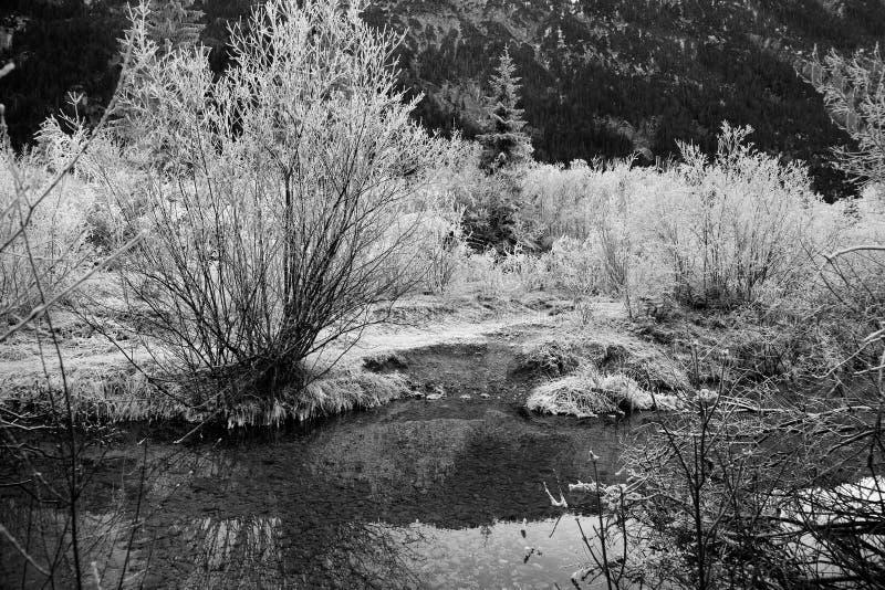 Παγωμένη φύση κοντά σε garmisch-Partenkirchen, Γερμανία στοκ εικόνα