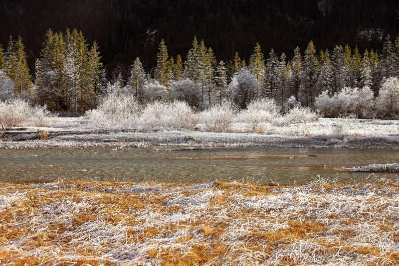 Παγωμένη φύση κοντά σε garmisch-Partenkirchen, Γερμανία στοκ εικόνες
