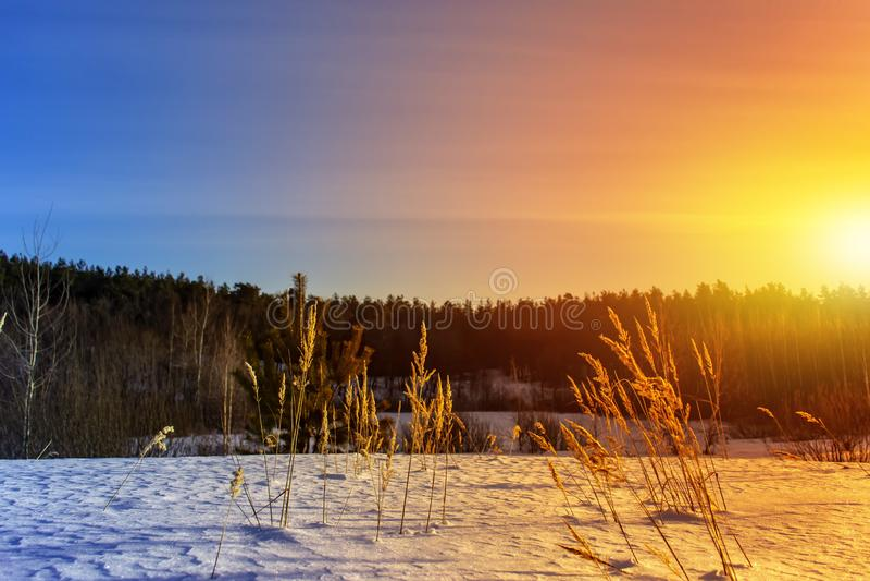 Παγωμένη χλόη στο χειμερινό ηλιοβασίλεμα μπλε snowflakes ανασκόπησης άσπρος χειμώνας στοκ εικόνες με δικαίωμα ελεύθερης χρήσης