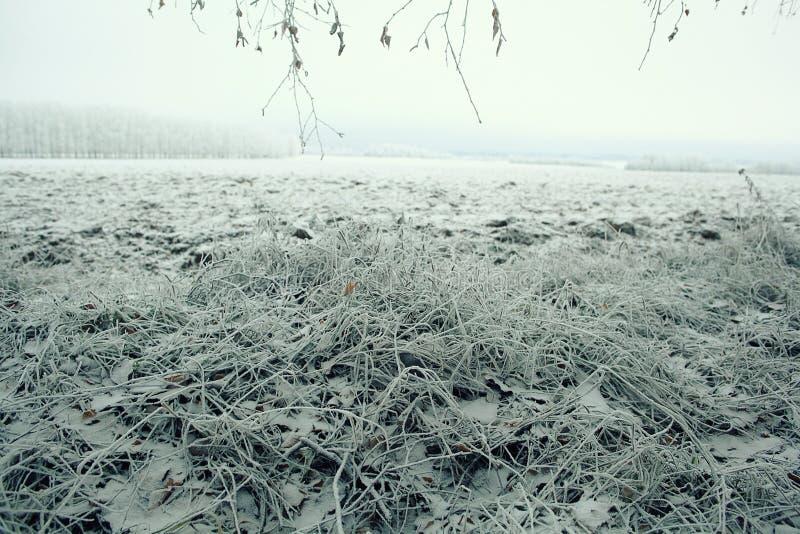 παγωμένη χλόη στοκ φωτογραφίες