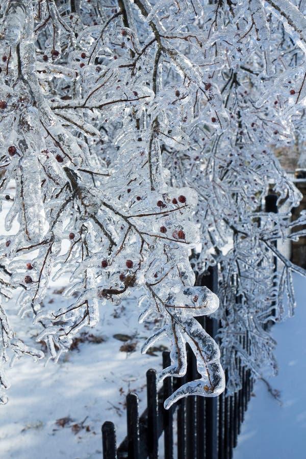 Παγωμένοι κλάδοι δέντρων μετά από τη βροχή παγώματος στοκ φωτογραφία με δικαίωμα ελεύθερης χρήσης