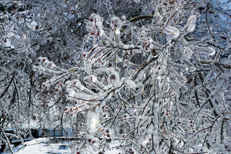 Παγωμένοι κλάδοι δέντρων μετά από τη βροχή παγώματος στοκ φωτογραφία