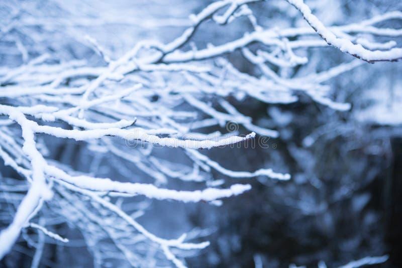Παγωμένοι χιονώδεις κλάδοι στοκ φωτογραφίες
