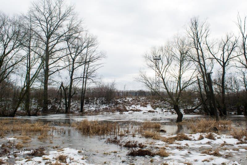 Παγωμένος κολπίσκος που λειώνει μεταξύ των σκοτεινών δέντρων κοντά στο χειμερινό δάσος στοκ εικόνα με δικαίωμα ελεύθερης χρήσης