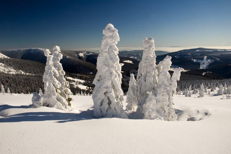 παγωμένος χειμώνας δέντρων στοκ εικόνες