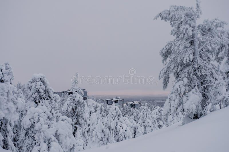 Παγωμένο δάσος που καλύπτεται από το χιόνι στοκ εικόνες
