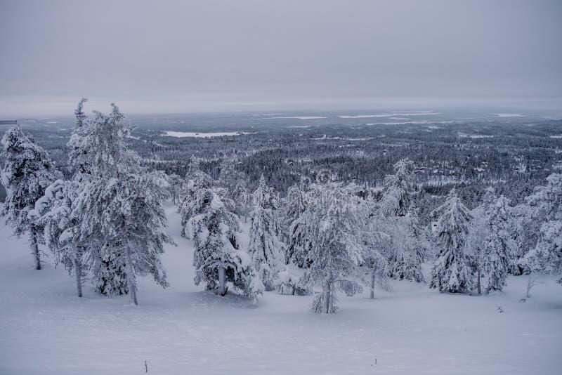 Παγωμένο δάσος που καλύπτεται από το χιόνι στοκ φωτογραφία
