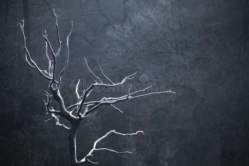 Παγωμένο δέντρο μπροστά από το σκοτεινό υπόβαθρο στοκ εικόνες