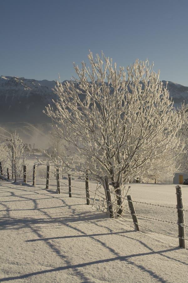 παγωμένο δέντρο στοκ εικόνες