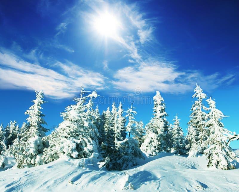 παγωμένο δέντρο στοκ φωτογραφίες με δικαίωμα ελεύθερης χρήσης