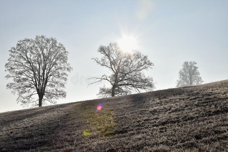 Παγωμένο τοπίο με τα δέντρα, μπλε ουρανός στοκ φωτογραφία με δικαίωμα ελεύθερης χρήσης