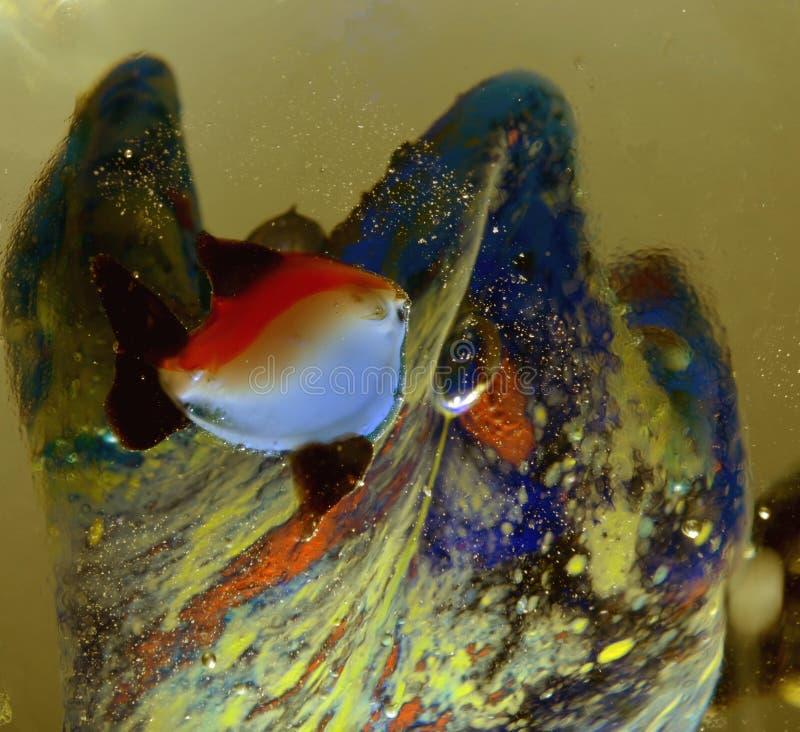 Παγωμένο ψάρια έγκαιρο, παγωμένο νερό με τη θαλάσσια ζωή στοκ φωτογραφία με δικαίωμα ελεύθερης χρήσης