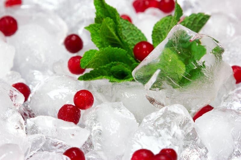 Παγωμένο cowberry με τα φρέσκα φύλλα μεντών στους κύβους πάγου στοκ εικόνα με δικαίωμα ελεύθερης χρήσης
