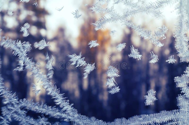 Παγωμένο snowflake σχέδιο σε ένα χειμερινό παράθυρο, έξω από το δάσος στο ηλιοβασίλεμα στοκ φωτογραφία
