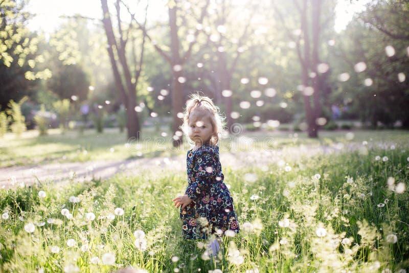 Παιδί ηλιοβασιλέματος πικραλίδων στοκ εικόνα