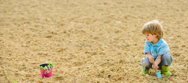 Παιδί που έχει τη διασκέδαση με λίγες φτυάρι και εγκαταστάσεις στο δοχείο Φύτευση στον τομέα Λίγος αρωγός στον κήπο Αγόρι που φυτ στοκ φωτογραφίες με δικαίωμα ελεύθερης χρήσης