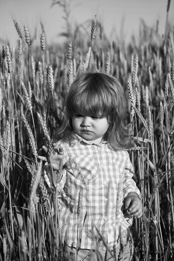 Παιδί στη μέση ενός τομέα σίτου Μικρό αγόρι στον πράσινο τομέα spikelets της χλόης στοκ φωτογραφίες