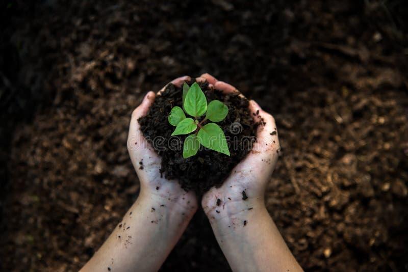 Παιδί χεριών που κρατά τις νέες εγκαταστάσεις στο πίσω χώμα στο πάρκο φύσης της αύξησης των εγκαταστάσεων