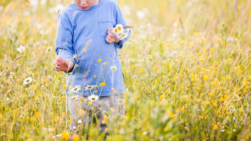 Παιδιά που επιλέγουν τα λουλούδια σε ένα λιβάδι στοκ φωτογραφία