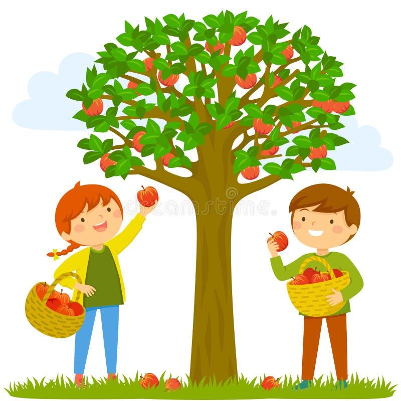 Παιδιά που επιλέγουν τα μήλα διανυσματική απεικόνιση