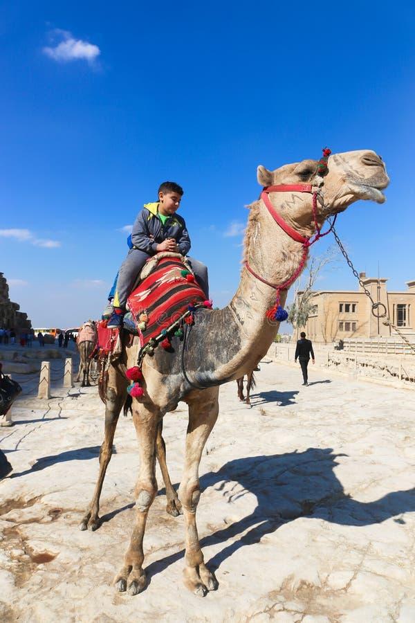 Παιδιά στην καμήλα στις πυραμίδες Giza στοκ φωτογραφίες με δικαίωμα ελεύθερης χρήσης
