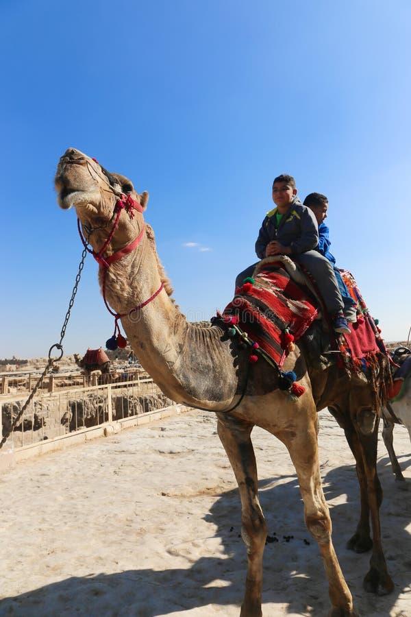 Παιδιά στην καμήλα στις πυραμίδες Giza στοκ εικόνες με δικαίωμα ελεύθερης χρήσης
