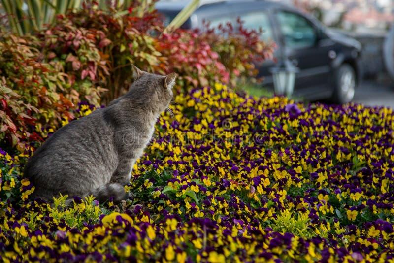 Παιχνίδια και κυνήγια γατών στα λουλούδια στοκ φωτογραφίες