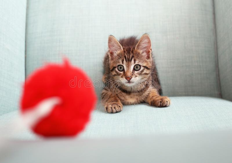 Παιχνίδι γατακιών με ένα παιχνίδι pon-pon στοκ φωτογραφία με δικαίωμα ελεύθερης χρήσης