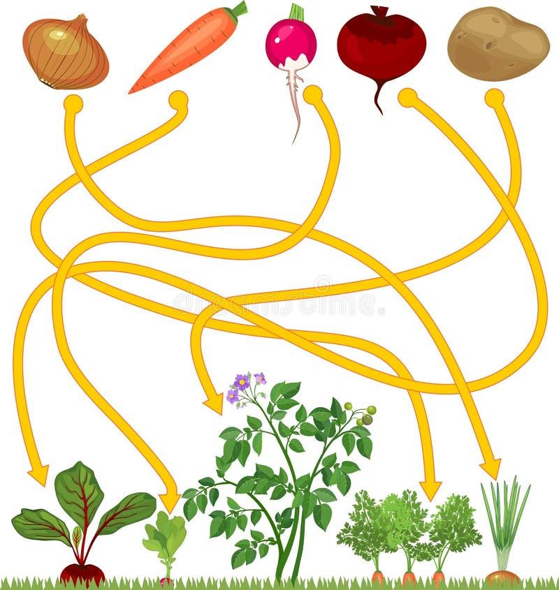 Παιχνίδι λαβυρίνθου για τα παιδιά της προσχολικής ηλικίας Λαχανικά στο φυτικό μπάλωμα ελεύθερη απεικόνιση δικαιώματος