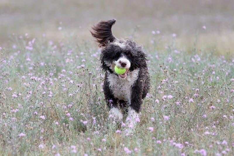 Παιχνίδι σκυλιών με μια σφαίρα στα θερινά λουλούδια στοκ εικόνα