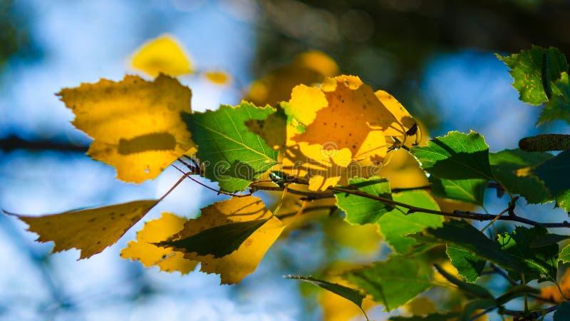 Παιχνίδι φθινοπώρου του φωτός και των σκιών στοκ φωτογραφία με δικαίωμα ελεύθερης χρήσης