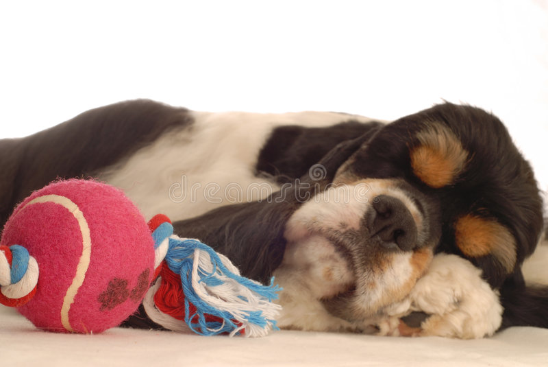 παιχνίδι ύπνου σκυλιών στοκ εικόνες με δικαίωμα ελεύθερης χρήσης