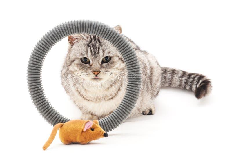 Παιχνίδι γατών και ποντικιών στοκ εικόνα με δικαίωμα ελεύθερης χρήσης