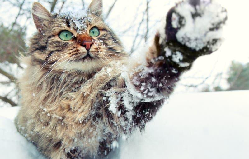 Παιχνίδι γατών με το χιόνι στοκ φωτογραφία με δικαίωμα ελεύθερης χρήσης